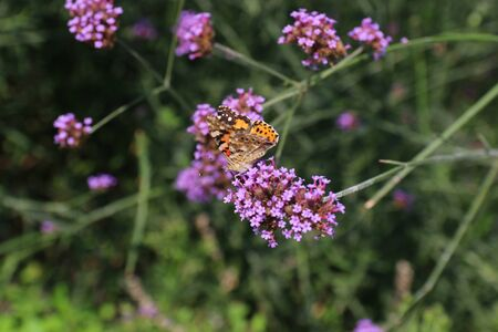 Close up photography - butterfly on a flower Banco de Imagens