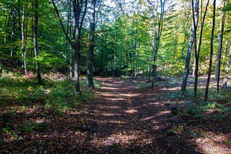 Forest in the autumn - outdoor photography Banco de Imagens