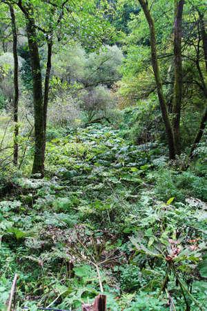 Purple flower int grenn vegetation - nature photography