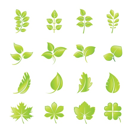 cosmetics collection: Set of green leaf icons