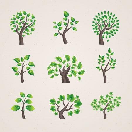 wellness environment:  trees