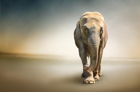 terrestre: Foto di lusso di elefante, il pi� grande animale terrestre Archivio Fotografico