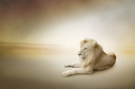 Luxury photo of white lion, the king of animals