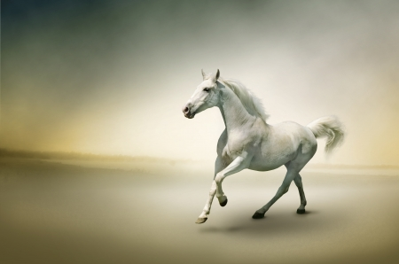 galloping: White horse in motion