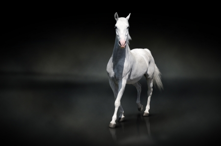 nobility: White horse isolated on black Stock Photo