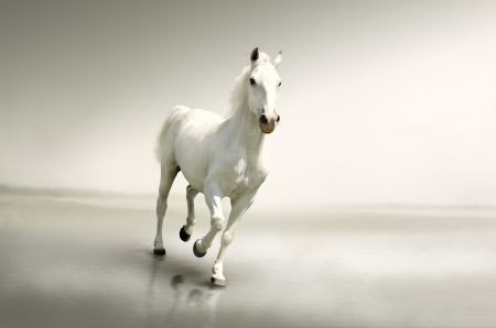 Beautiful white horse in motion photo