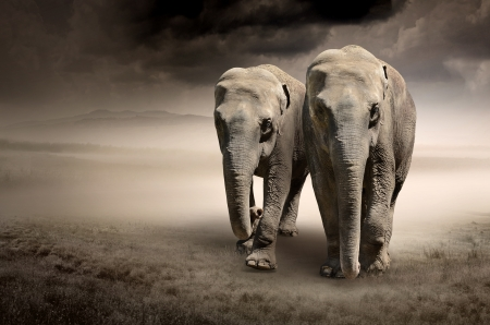 wild asia: Pair of elephants in motion