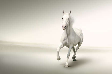 White horse  Stock Photo - 14811350
