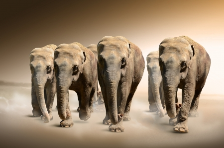 family park: Herd of elephants  Stock Photo