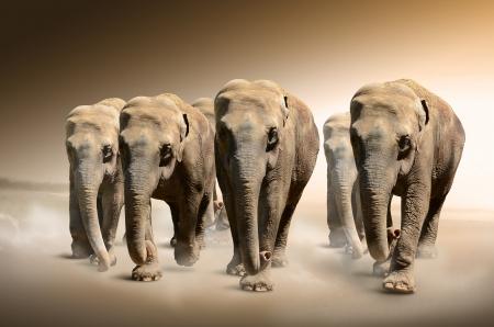 terrestrial mammal: Herd of elephants  Stock Photo