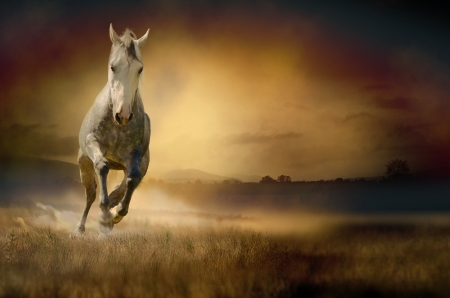 carreras de caballos: Caballo blanco en puesta del sol Foto de archivo