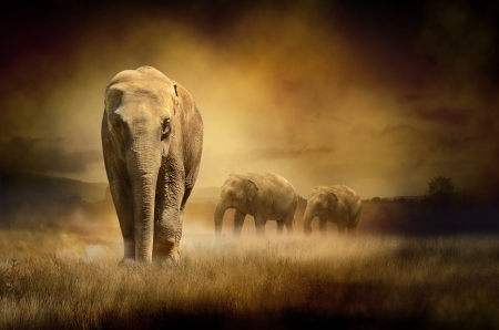 Elephants at sunset Stock Photo
