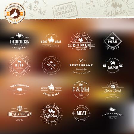 carne de pollo: Conjunto de elementos de la vendimia del estilo para las etiquetas y las insignias de la carne, los productos orgánicos frescos, en el fondo estilizado