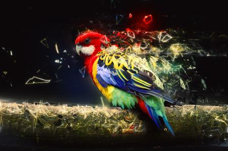 papagayo: Loro en el concepto abstracto animal rama. Foto de archivo