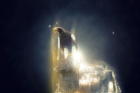 photo manipulation: Eagle standing on a rock, abstract animal concept. Can be used for wallpaper, canvas print, decoration, banner, t-shirt graphic, advertising.