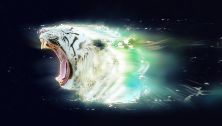 jaws: White tiger with open jaws, abstract animal concept.