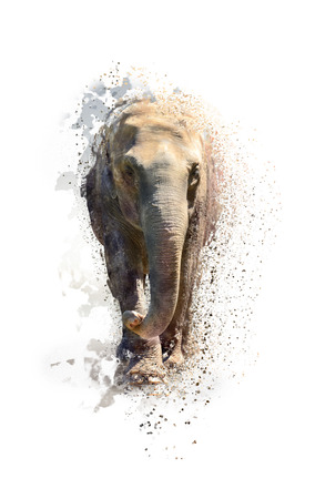 Portret van een olifant, abstracte dierlijke concept geïsoleerd op wit. Kan gebruikt worden voor behang, canvas afdrukken, decoratie, banner, t-shirt grafisch, reclame. Stockfoto