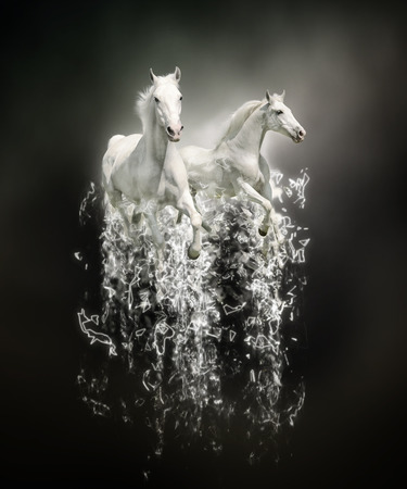 for advertising: White horses, abstract animal concept on black background. Can be used for wallpaper, canvas print, decoration, banner, t-shirt graphic, advertising.