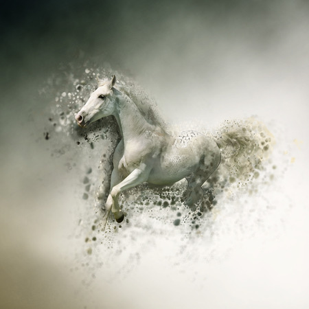 arabian background: White horse, animal concept. Can be used for wallpaper, canvas print, decoration, banner, t-shirt graphic, advertising.