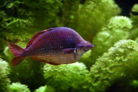 Tropical fish and sea plants in the background Stock Photo