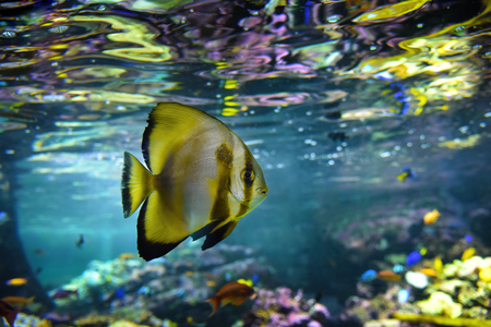 Aquarium tropical fish and coral reef