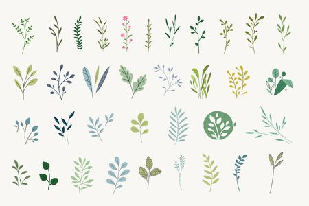 Set of natural and floral elements for graphic and web design. Vectores