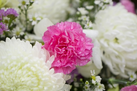 Bouquet of beautiful pink carnations Stock Photo