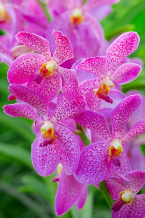 Orchids with green background