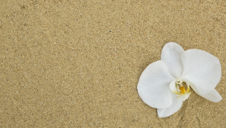 Sand, pebbles and orchid in zen setting