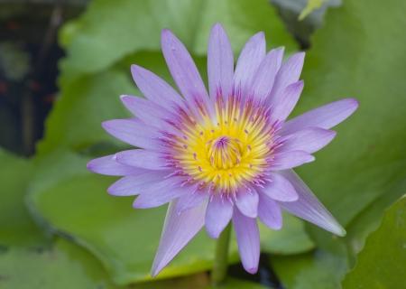 beautiful flower, Thailand Stock Photo