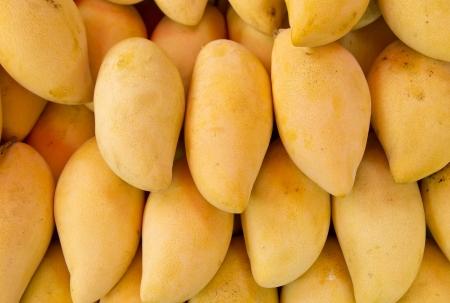 Mangoes Stock Photo - 19082960