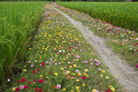 wild flowers growing by a country road photo