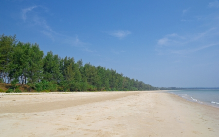 Pine lined beach in Angthong Marine National Park in Thailand photo