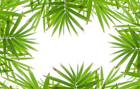 Branch of bamboo-leaves isolated on a white background