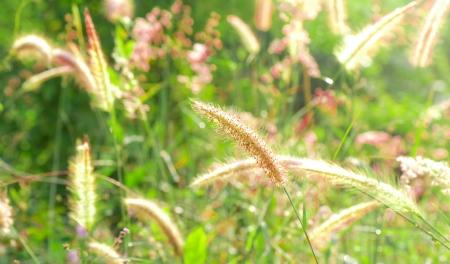 meadow  grass: Salvaje pradera de c�sped con un enfoque selectivo