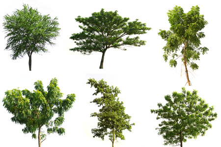 Collection of trees tropical tree isolated on white