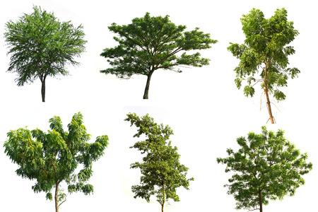 Colección de árboles árbol tropical aislado en blanco