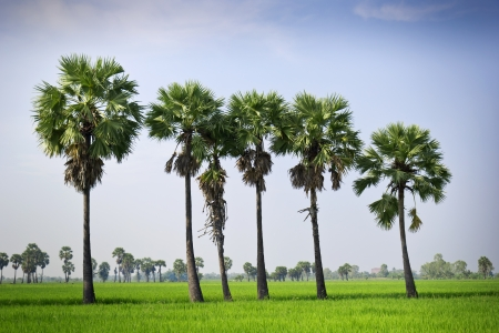 Countryside of Thailand, Asia  photo