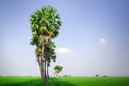 non cultivated: Countryside of Thailand, Asia Stock Photo