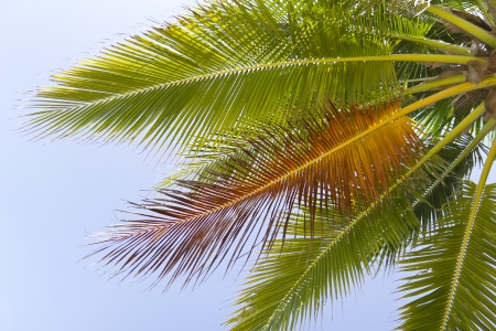 Palm frond with the sun lighting up its bright green fronds against blue sky