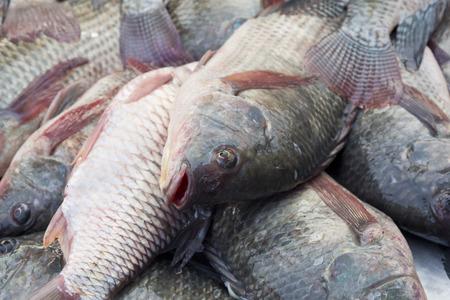 Group of tilapia fish ,fish market
