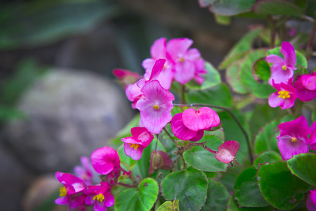 Blossom small pink flowers Stock Photo