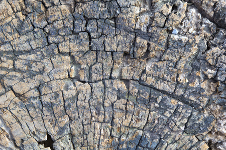 A close up of the very old cut of tree