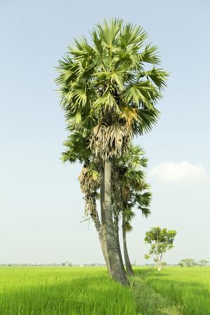 Palm tree against a beautiful blue sky Stock Photo