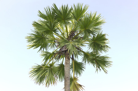 caribbean climate: Palm tree against a beautiful blue sky Stock Photo
