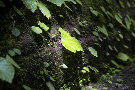 Bright green leaves in deep shadowed forest