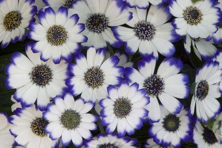 花白い花びらと青のヒント