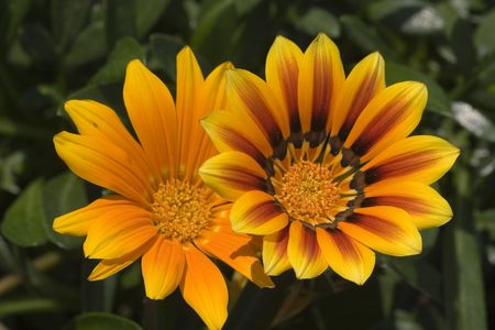 iceflower: Due di fiori