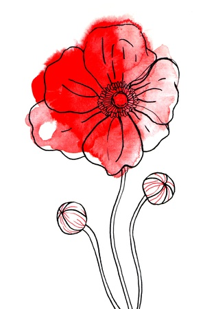 painterly: Red watercolor poppy on white