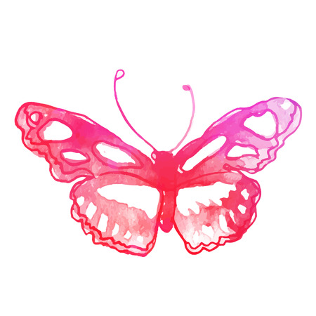 metamorphosis: Amazing watercolor butterfly. Vector art isolated on white
